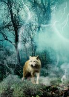.:.Wolf Swamp.:. by Wolven-Sister