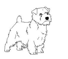 Norfolk Terrier Lines by Wolfs-Hybrid