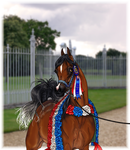 Arabian Nationals Grand Champ Memento by ReQuay