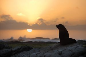 Seal By Sunrise by CainPascoe