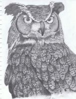 Wise Old Owl by Narzaria
