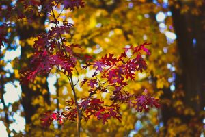 Autumn Leaves II by Kvothe-07