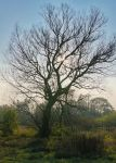 Leafless by starykocur