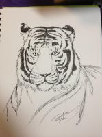 Tiger doodle by DaggarHeart