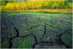 Cracked Earth by tourofnature