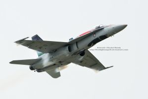Hornet High Speed Pass by 8TwilightAngel8