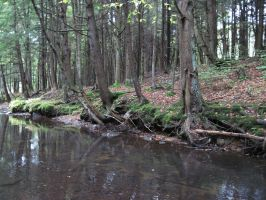 Forest Stream 15 by Salamander-Stock