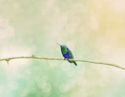 Lonely Humming Bird by Ceruleano