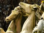 Crazy Horses by Clangston