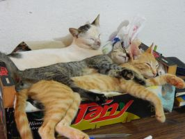 three kitens one box by Elricthecat