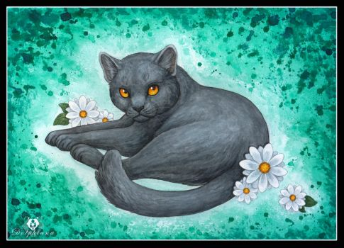 Chartreux by DolphyDolphiana