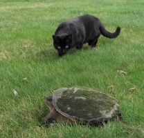 Black Panther Stalks Armored Dinosaur by SuperDuperCCD
