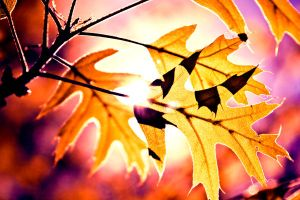 Colorful Leaves -5- by Michael-the-3rd