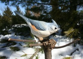Tufted Titmouse by mossoak