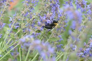 The Big Fuzzy Bumble Digging In the Buds 4 by Miss-Tbones