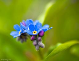 Flower27 by PictureByPali