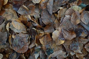 leaves by sys66