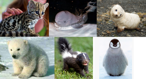 Adorable Baby Animals by GoForeverGreen