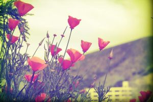 Poppies, 4 by ThatsByronic