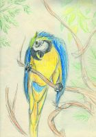 Blue Macaw by The-Darkwolf