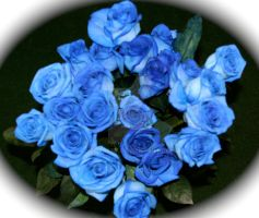 Blue Roses by botskey