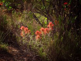Paintbrush in the Forest by norif
