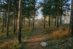 Pine forest by Lubov2001