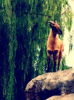 Mountain goat by Eyocore