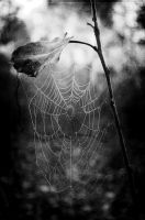 spider web by kitty-coffee