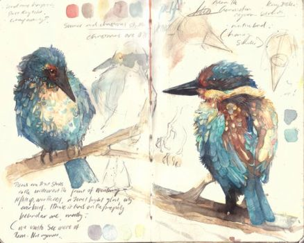 Kingfisher sketches by PaperandDust