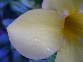 Yellow Flower Petal Macro by Retoucher07030