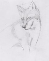 fox sketch by neokiva
