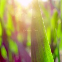 Thank You by Gastya