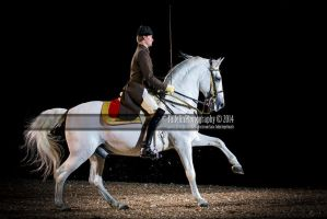 Spanish Riding School 34 by JullelinPhotography