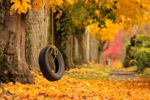 Fall Colours by EnphaseMedia