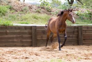 KM canter after landing jump front view by Chunga-Stock
