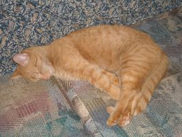 Sleeping Cat Stock 5 by Orangen-Stock
