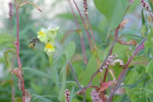 Little Bee Hovering 2 by Miss-Tbones