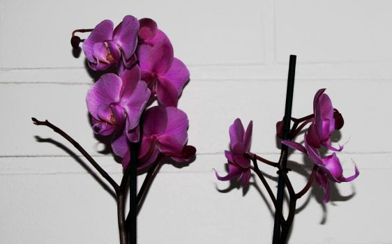 Orchid II by Decial