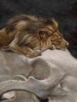 a dream of a lion by Animal75Artist