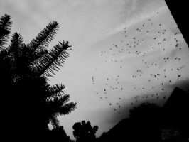 The swarm by oliverdrop