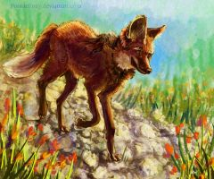 Maned Wolf by PookiePony