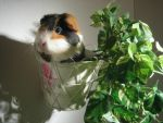 :.I become a plant.: by Evechu19