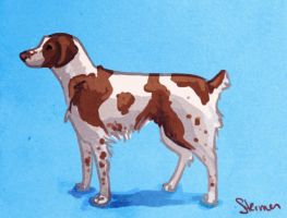 Murphy Brittany Spaniel by KittyNamedAlly