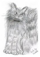 Maine Coon by DrakebyRS