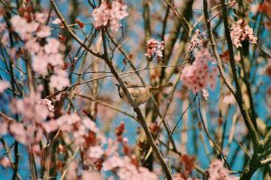 Birdy in the Japanese Tree by zeldalilly