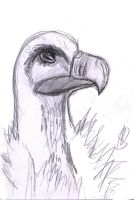 Vulture by mikusia27