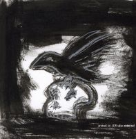 raven on a skull by midniteoil