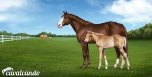 Cavalcando - American Quarter Horse by Chistokrovka