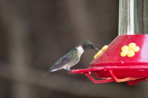 The Hummers Are Back And Hungry by justanewb42